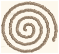 spiral, a common petroglyh form on ometepe